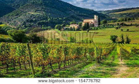 Vineyards and the monastery in Tuscany in summer