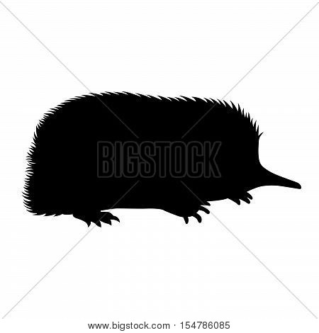 Spiny anteater ( shade picture ) on white