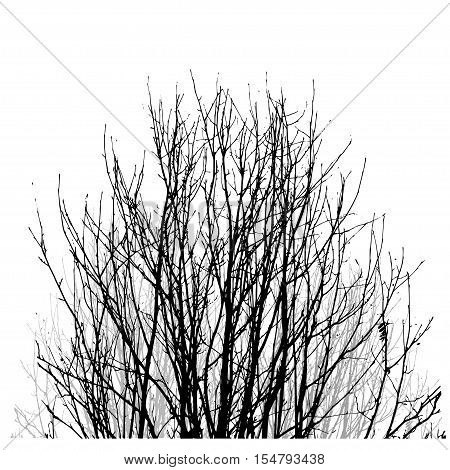 Realistic vector black silhouette of tree bare branches without leaves on a white background. Lifeless naked bush shrub with fallen leaves