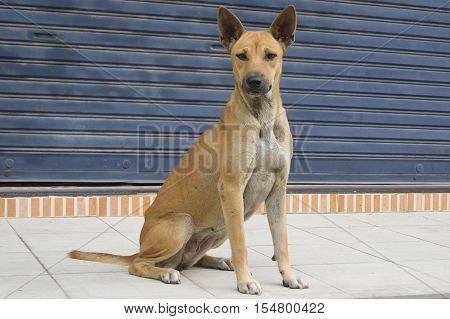 Dog Sitting On The Sidewalk Elegant Swagger