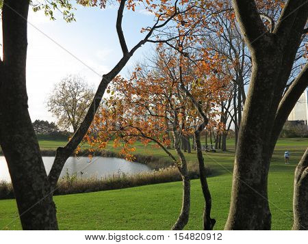 Orange tree leaves in fall with pond setting looking towards Seven Bridges Golf Course in Hoffman Estates, Illinois