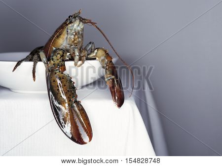 Fresh lobster on a white plate and table. Close up