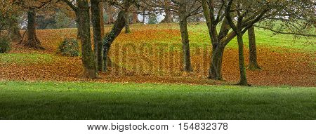 Lush greens and cruchy golden leaves in an Autumn morning at Ravenhill park in Swansea, South Wales.