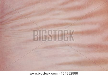 Skin leg macro shot of a human. Abstract