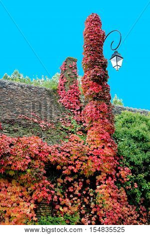 a chimney invaded by the vegetation in autumn