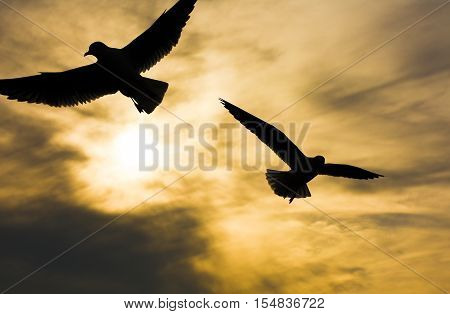 Seagulls flying at sunset sky, silhouette. Sun between clouds two seagull flying.
