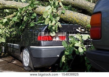 Big Tree Fall Down On Car During Hurricane