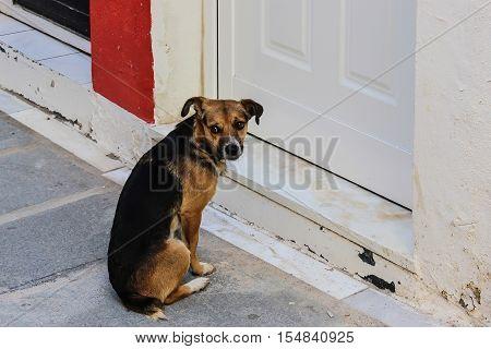 A sad stray dog sit at the door