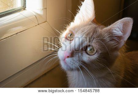 A tiny cat enjoys the light of the sun through the window