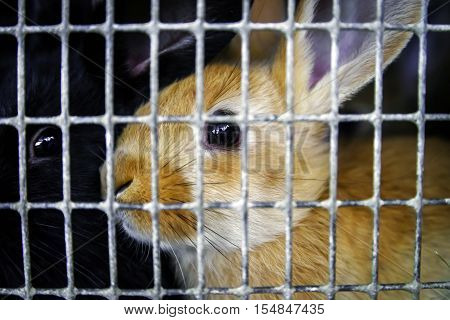 Rabbits In The Cage On Countryside Farm