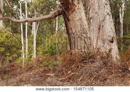 Detail of native trees and vegetation growing near the shore of Stewarts Bay on the east coast of Tasmania