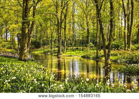 Garden in Keukenhof tulip flowers pond and trees on background in spring. Netherlands Europe.