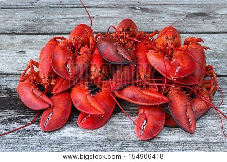 Pile of 7 Steamed Lobsters (Ready for Feasting!)