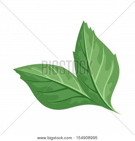 Green leaf vector illustration. Flat design. Spring flowering and autumn trees defoliation. For nature concepts, plant infographic, icons or web design. Gardening growing. Isolated on white background
