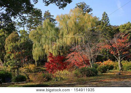 Daikaku-ji kyoto japan fall season at 2014