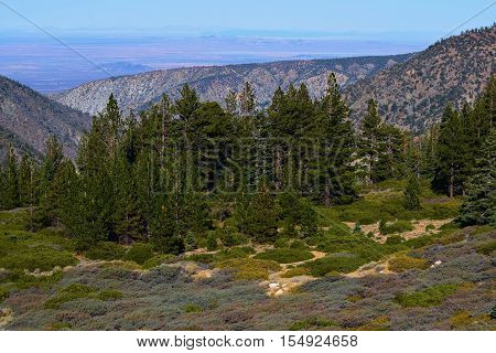 Meadow surrounded by a Pine Forest with the Mojave Desert beyond taken in the San Gabriel Mountains, CA