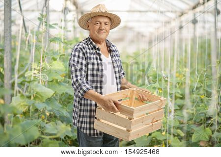 Elderly farmer holding an empty wooden crate in a greenhouse