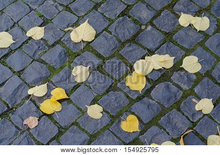 fallen yellow leaves on geometry pattern of city cobblestone pavement