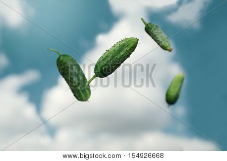 juicy green cucumbers tossed the air. Food for vegetarians and raw foodists.
