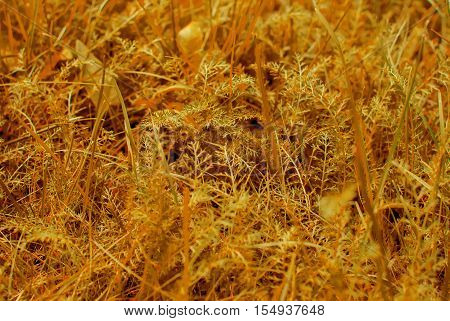 Yellow broun grass macro close up. Toned photo.