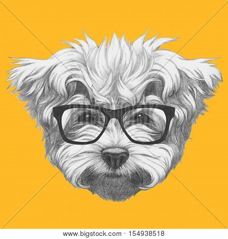 Original drawing of Maltese Poodle with glasses. Isolated on colored background.