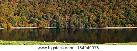 Pen Y Garreg reservoir autumn tree colours panorama, sheep grazing.