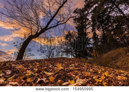 Fallen leaves and tree silhouette at sunset. Colorful autumn and Moravian landscape Lysice.
