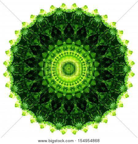 kaleidoscope Green vegetable coriander and lettuce diet food