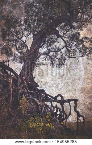 Creepy old tree with exposed tangled roots on an eroded gully. Grunge textured, vintage style image.