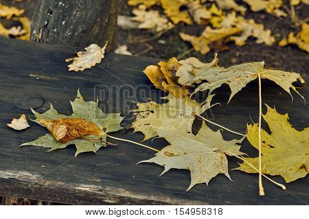 Yellow And Red Leaves On A Bench