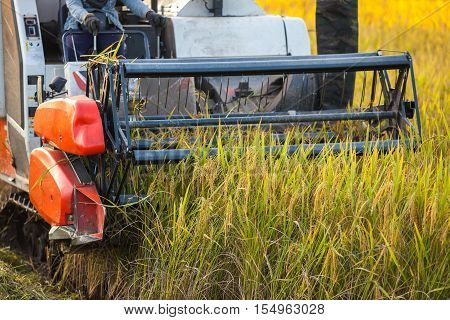 Harvesters for rice harvesting work. Harvesters and harvesting machines agricultural fields rice agriculture.