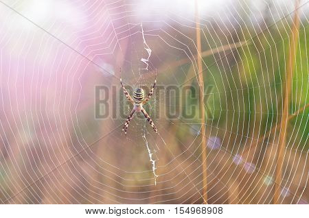 spiderweb with spider in the middle in the solar glare from the lens