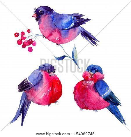 Winter vintage watercolor illustration with bullfinches. Holiday Christmas design elements isolated on white background. Christmas collection