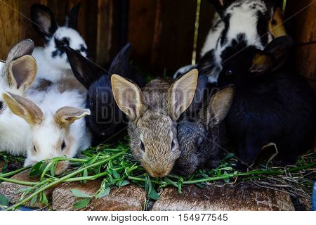 Many Young Sweet Bunnies In A Shed. A Group Of Small Colorful Rabbits Family Feed On Barn Yard. East
