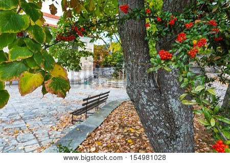 autumn shot with bench, rowanberries and fallen leaves