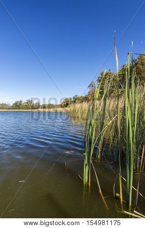 A scenic lake with cattails in autumn.