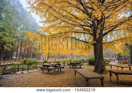 Nami island romantic in a park with colorful trees and fog. autumn natural in south korea.