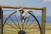 A cow skull mounted on a steel wagon wheel with mountains in the background poster