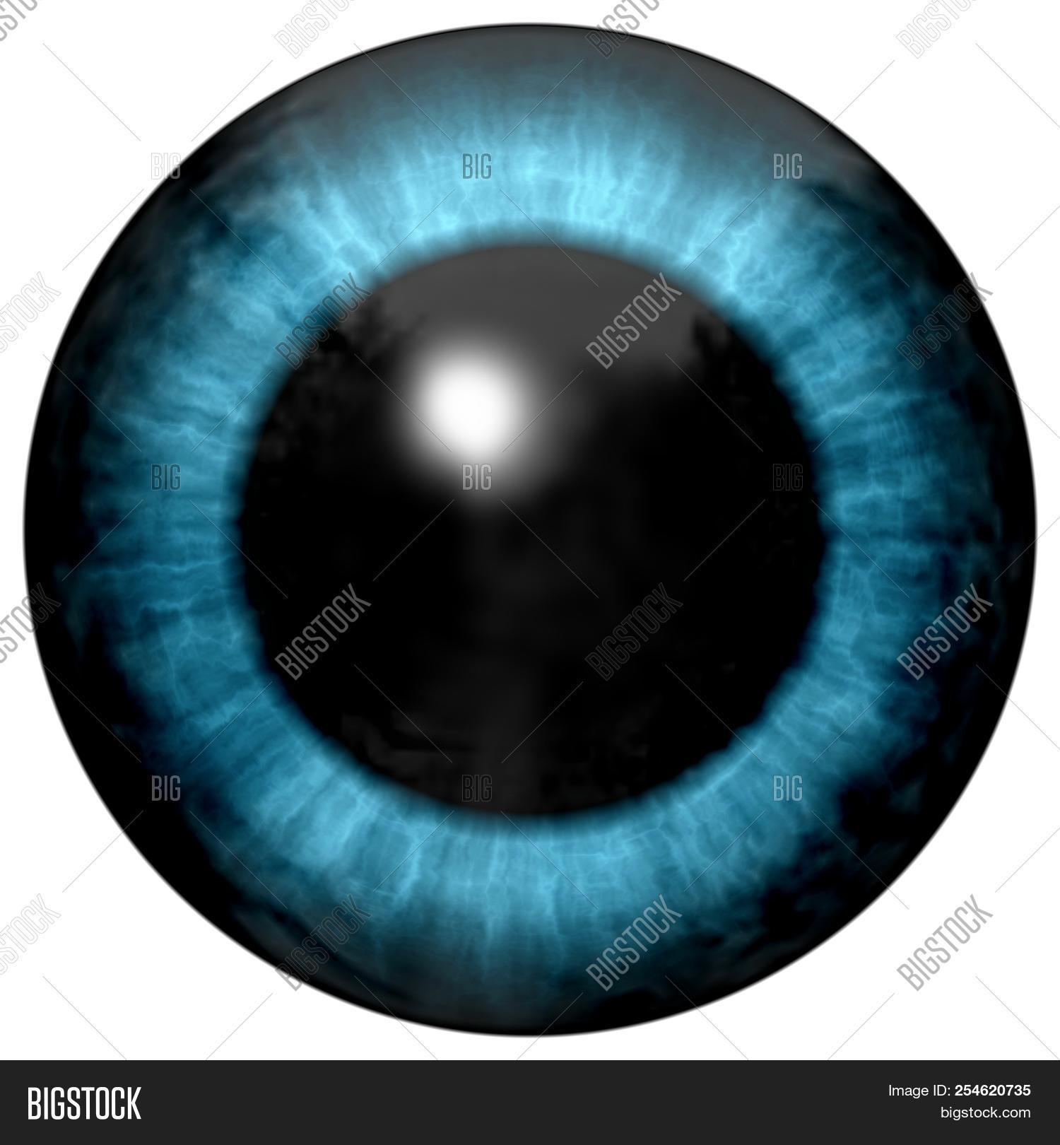 Beautiful Blue Eyes Image Photo Free Trial Bigstock