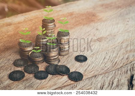 Money, Plant On Pile Coins Growing Concept And The Financial Goals Success.