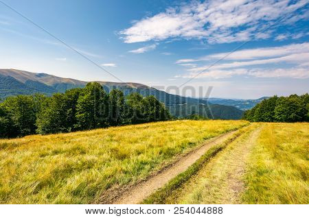 Dirt Road Through Alpine Meadow Among Beech Forest. Wonderful Summer Landscape. Distant Mountain Rid