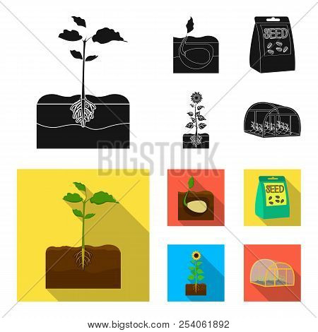 Company, Ecology, And Other Web Icon In Black, Flat Style. Husks, Fines, Garden Icons In Set Collect