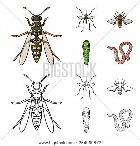 Worm, Centipede, Wasp, Bee, Hornet .insects Set Collection Icons In Cartoon, Outline Style Vector Sy