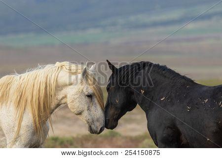 Beautiful Wild Horses In The Utah Desert In Summer