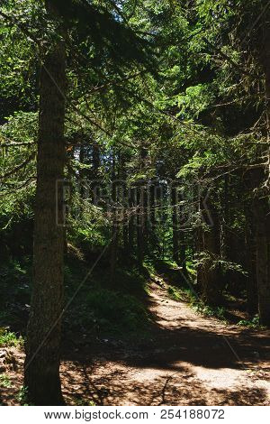 Dramatic Forest Landscape. Hiking Trail In The Forest Of Durmitor National Park. Walk To The Black L