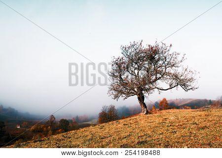 Amazing scene on autumn mountains. Alone naked tree in fantastic morning mist. Carpathians, Europe. Landscape photography