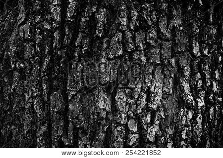 Close Up Beautiful Natural Rough Dirty Grunge Black And White Tree Bark For Wallpaper Background And