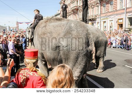 St. Petersburg, Russia - 26 May, Parade Of Elephants In Front Of The Audience, 26 May, 2018. Parade