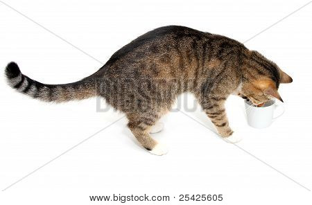 tabby cat and cup of coffee on white background poster