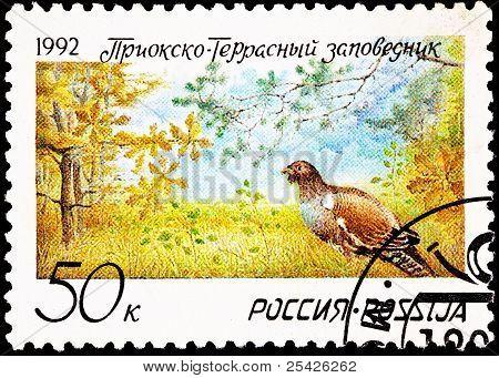 Pheasant Prioksko-terrasny Nature Reserve